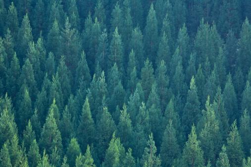 Japan「Cypress Forest」:スマホ壁紙(8)