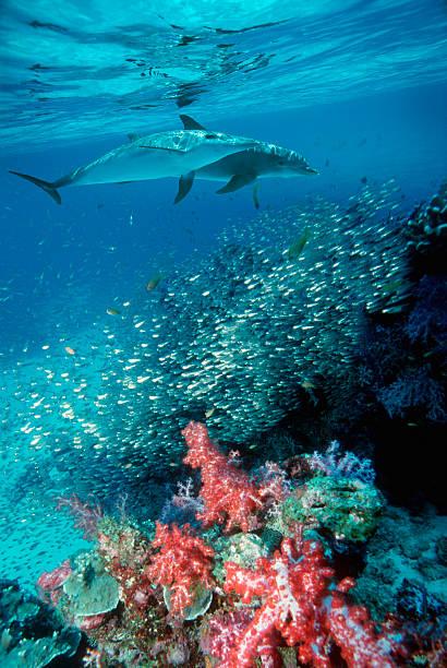 海のイルカのまとめ:2006年07月31日(壁紙.com)