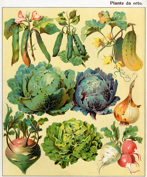 Radish「The Vegetable Garden Products」:写真・画像(1)[壁紙.com]