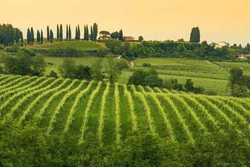 Prosecco「Conegliano Veneto - Collabrigo - the prosecco hills」:スマホ壁紙(12)
