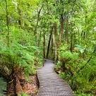 ワイポウア森林保護区壁紙の画像(壁紙.com)
