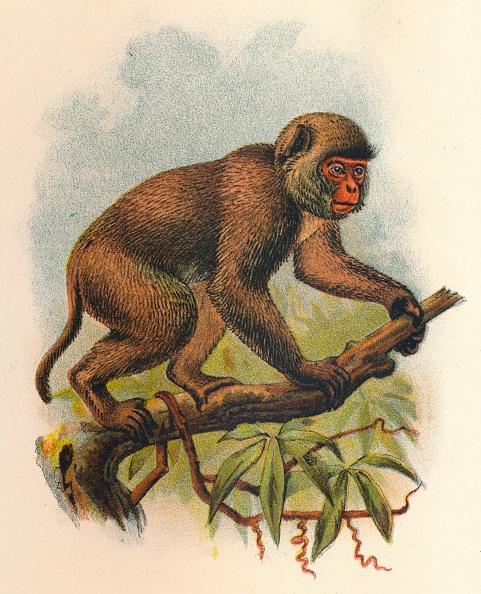 Balance「St JohnS Macaque」:写真・画像(19)[壁紙.com]