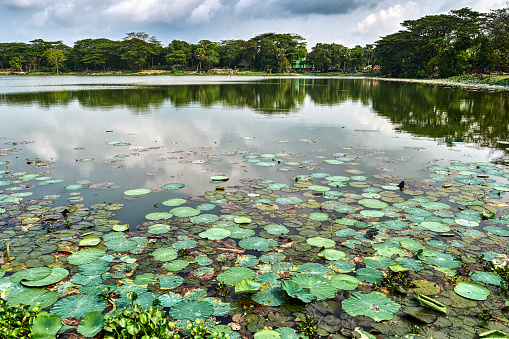 Water Lily「Eighty Domes mosque pond, Bangladesh」:スマホ壁紙(12)