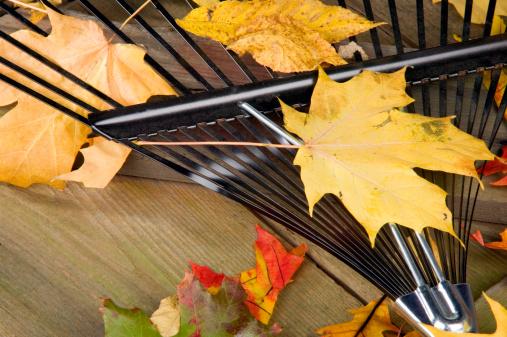Picnic「Rake and leaves on picnic table」:スマホ壁紙(7)