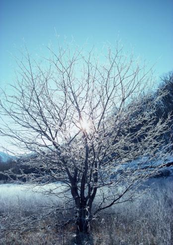 Nikko City「Dead Tree」:スマホ壁紙(13)
