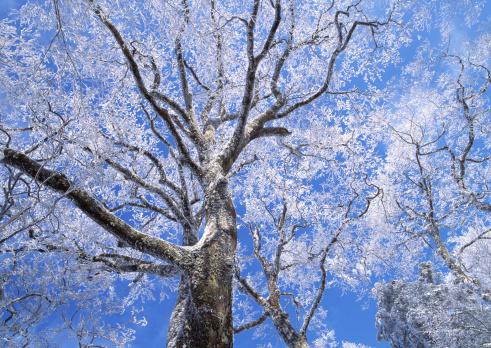 Nikko City「Dead Tree」:スマホ壁紙(5)