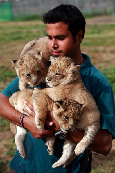 Big Cat「One Month Old Lion Cubs Take Their First Outing」:写真・画像(13)[壁紙.com]