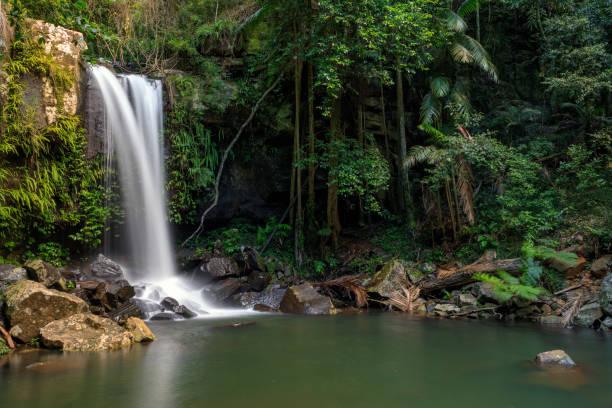 Curtis Falls - Tropical Rainforest Waterfall Australia:スマホ壁紙(壁紙.com)