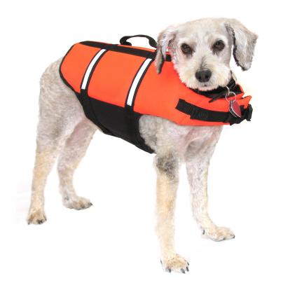 Mixed-Breed Dog「Safety Dog」:スマホ壁紙(16)