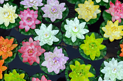 Water Lily「Multicoloured Plastic Lotus Flowers」:スマホ壁紙(17)