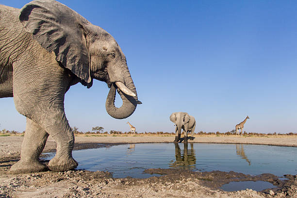 Remote Camera View of African Elephants, Botswana:スマホ壁紙(壁紙.com)