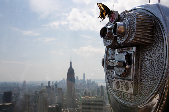 Butterfly - Insect「Solar Eclipse Visible Across Swath Of U.S.」:写真・画像(16)[壁紙.com]