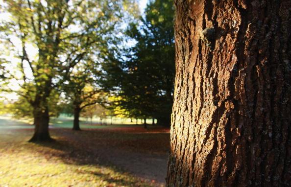 風景(季節別)「Autumn Colours Throughout The UK」:写真・画像(1)[壁紙.com]