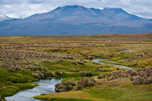 Bolivian Andes「Sajama National Park」:スマホ壁紙(16)