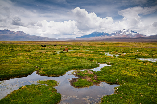 Bolivian Andes「Sajama National Park」:スマホ壁紙(1)