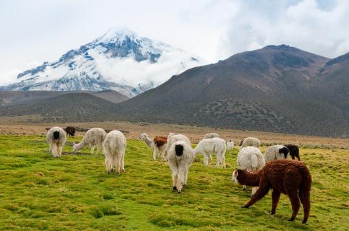 Bolivian Andes「Sajama National Park」:スマホ壁紙(8)