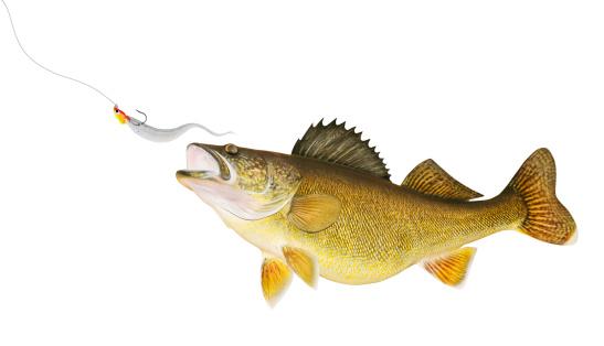 Pike - Fish「Walleye Chasing Lure」:スマホ壁紙(5)
