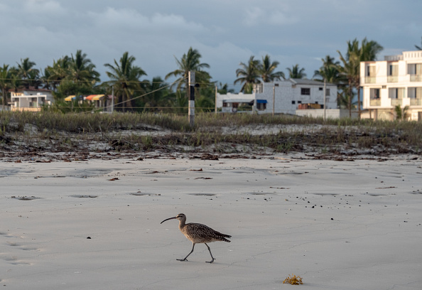 世界遺産「Nature and Human Lives Seek Equilibrium In Galapagos」:写真・画像(13)[壁紙.com]