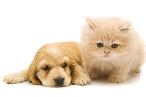 子猫「ご友人」:スマホ壁紙(0)