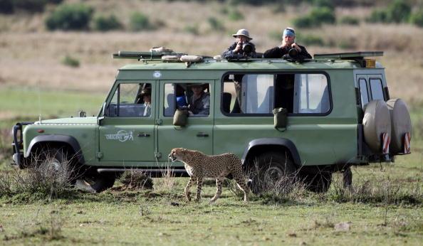 Big Cat「Kenyan Safari」:写真・画像(11)[壁紙.com]