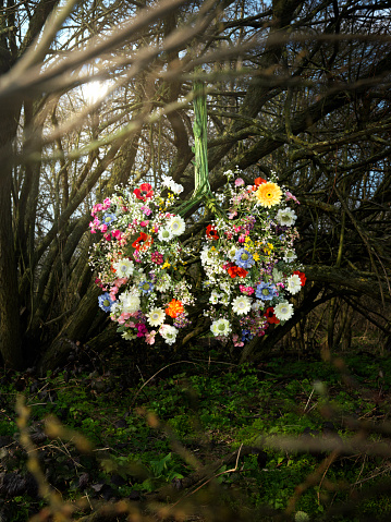 Focus On Background「Lungs constructed from flowers in forest」:スマホ壁紙(14)