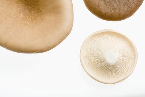シイタケ「Shitake Mushrooms」:スマホ壁紙(12)