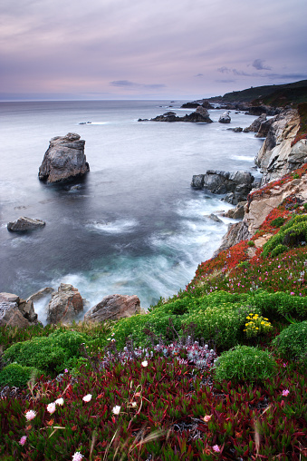 Big Sur「Garrapata Shore Coastline and Wildflowers」:スマホ壁紙(2)