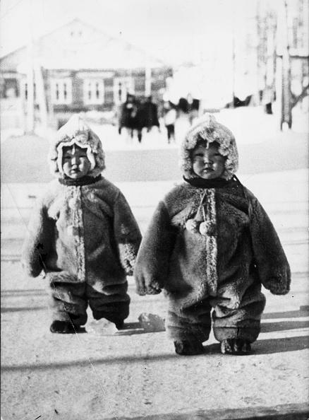 Protection「Woolly Penguins」:写真・画像(18)[壁紙.com]