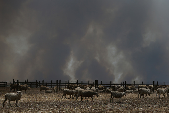 Kangaroo Island「Kangaroo Island Bushfire Threat Increases As Residents Are Told To Evacuate」:写真・画像(1)[壁紙.com]