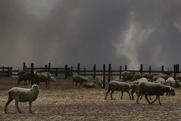 Kangaroo Island「Kangaroo Island Bushfire Threat Increases As Residents Are Told To Evacuate」:写真・画像(11)[壁紙.com]