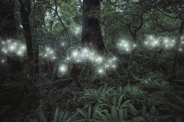Glowing spheres hovering in forest:スマホ壁紙(壁紙.com)