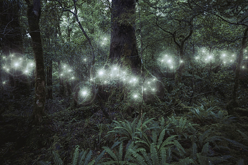 Virtual Reality「Glowing spheres hovering in forest」:スマホ壁紙(13)