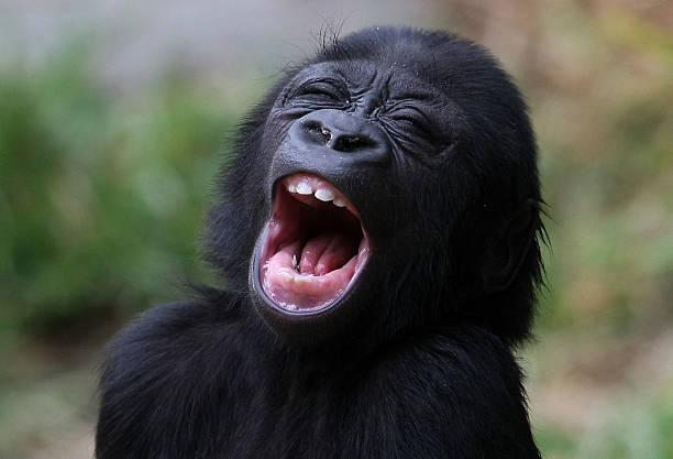 Six-Month-Old Baby Gorilla Makes Public Debut At San Francisco Zoo:ニュース(壁紙.com)