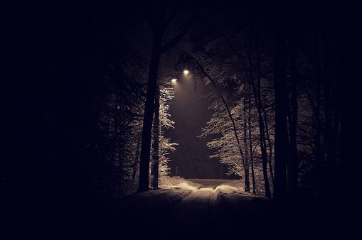 雪景色「深い森」:スマホ壁紙(8)
