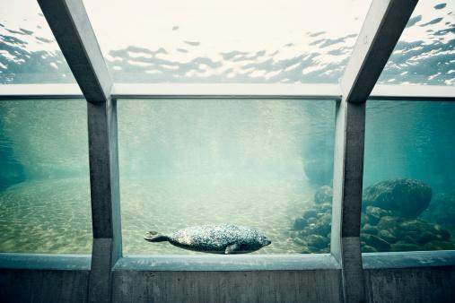 Aquarium「Seals in aquarium」:スマホ壁紙(11)