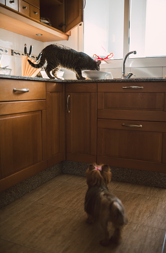 Focus On Background「Dog watching eating cat in the kitchen」:スマホ壁紙(18)