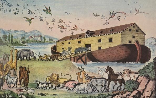 動物「Noah'S Ark」:写真・画像(4)[壁紙.com]