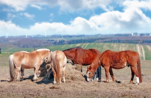 Stallion「Horses eating」:スマホ壁紙(17)