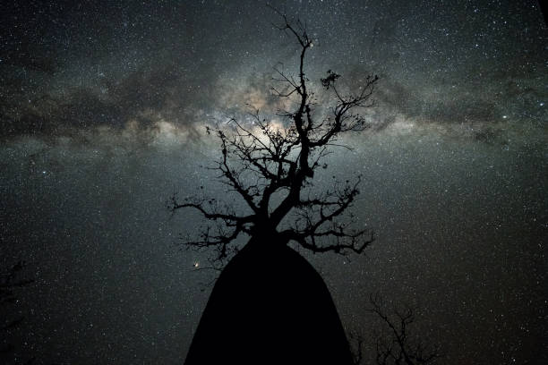 Milky Way at Avenue of the Baobabs:スマホ壁紙(壁紙.com)