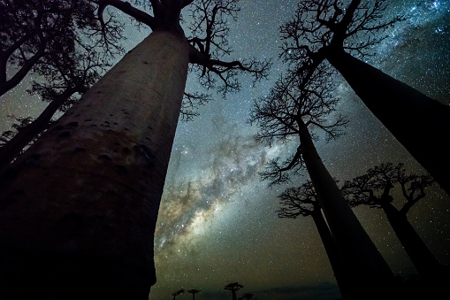 Avenue「Milky Way at Avenue of the Baobabs」:スマホ壁紙(9)
