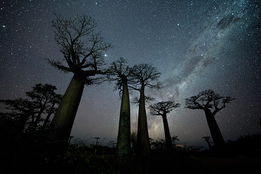 Contrasts「Milky Way at Avenue of the Baobabs」:スマホ壁紙(10)