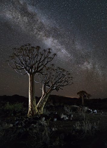 Milky Way「Milky Way at Quiver Tree Forest, Keetmanshoop, Namibia, Africa」:スマホ壁紙(14)