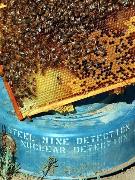 Sandia Mountains「Bee land mine detection experiment」:写真・画像(1)[壁紙.com]
