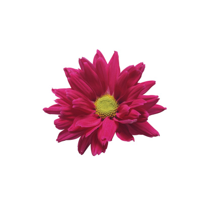 Flower Stigma「Daisy」:スマホ壁紙(12)