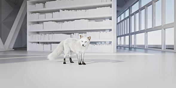Arctic Fox「Snow fox in white library」:スマホ壁紙(18)