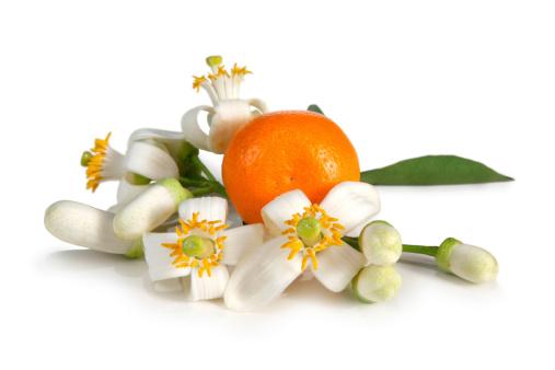 Orange - Fruit「Orange Blossoms」:スマホ壁紙(15)