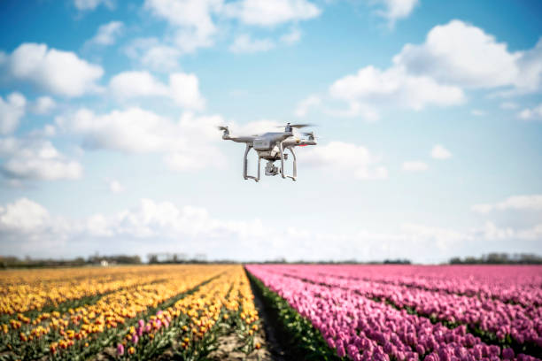 Netherlands, drone with camera flying over tulip fields:スマホ壁紙(壁紙.com)