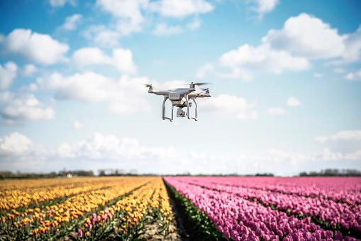 趣味「Netherlands, drone with camera flying over tulip fields」:スマホ壁紙(15)