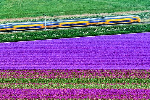Netherlands「Netherlands, Aerial view of train on tulip fields near Den Helder」:スマホ壁紙(17)