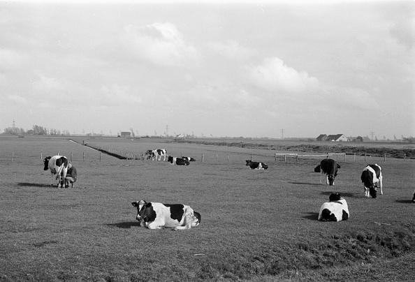 Pasture「Netherlands」:写真・画像(19)[壁紙.com]